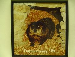 Groundhog Burrow Magnet Sku # 324