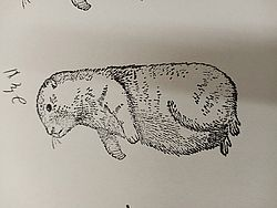 Let's Hope for an Early Spring Stamp Sku # 352