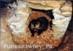 Postcard - Groundhog Burrow