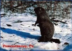Postcard - Groundhog Snow Scene Sku # 315