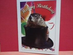 Punxsutawney Phil Birthday Card - PhotoIllustrated Sku # 242
